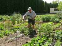 Dave in his community garden